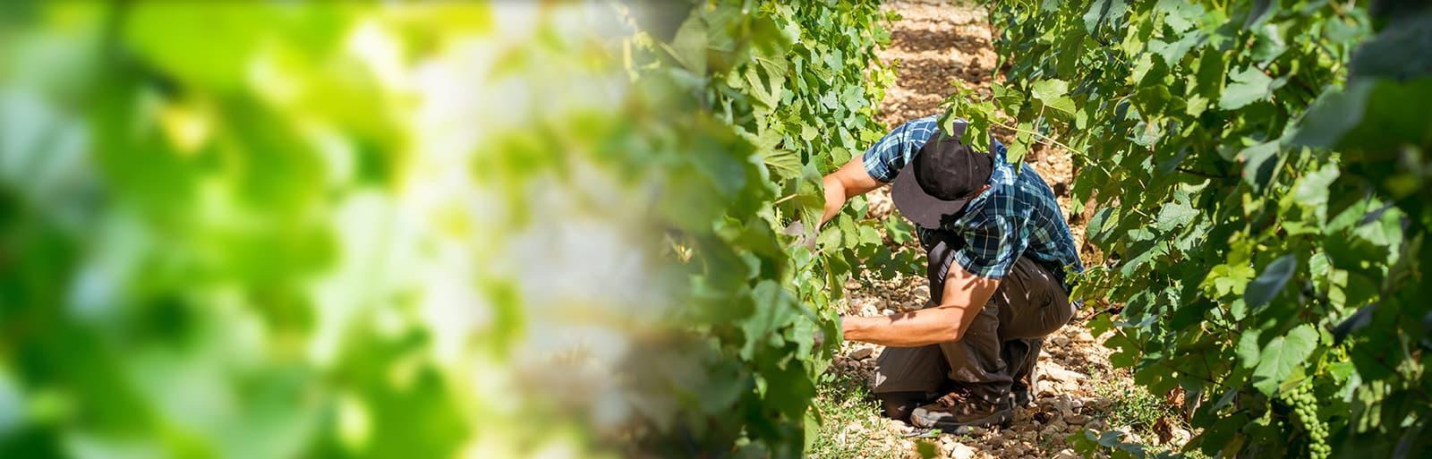 Logiciel de compta viticole