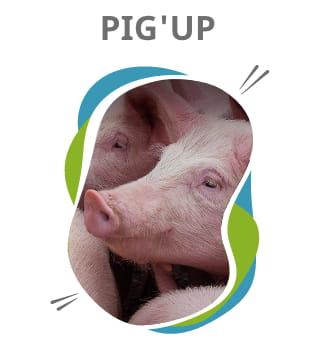 Pig'UP logiciel de gestion de troupeau de truies