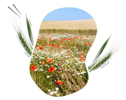 Je répons aux défis environnementaux agricole avec les solutions ISAGRI, Geofolia et Météus