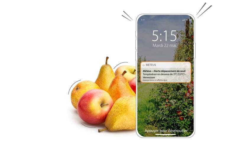 Avec l'application Smartphone Météus je suis alerté en cas de gel pour protéger mes cultures