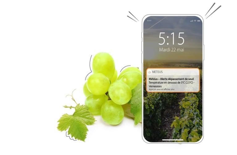 Avec l'application Smartphone Météus je suis alerté en cas de gel pour protéger mes vignes