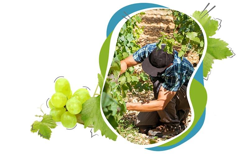 ISACOMPTA, la gestion adaptée pour les viticulteurs